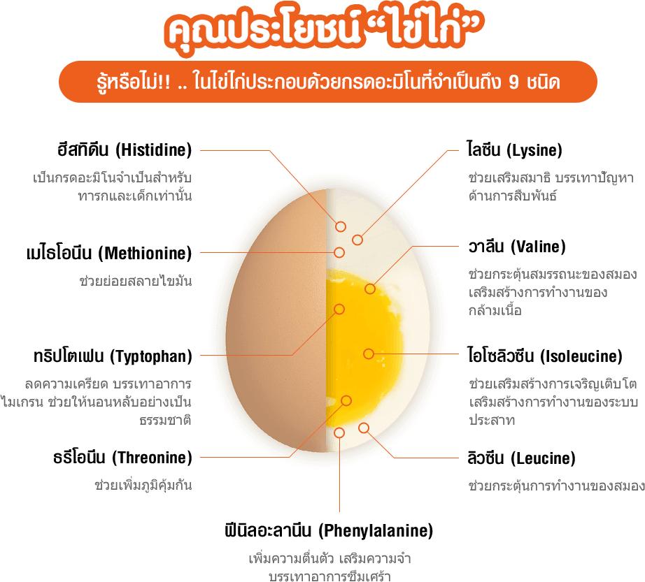 คุณประโยชน์ ไข่ไก่ ในไข่ไก่ประกอบด้วยกรดอะมิโนที่จำเป็นถึง 9 ชนิด